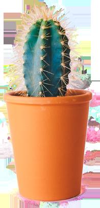 commonfloor-plant